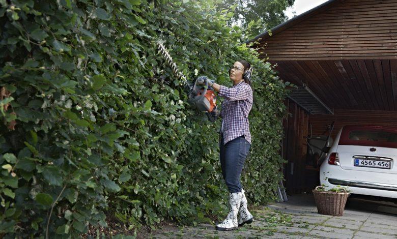 Photo of Léto hlásí poločas, živé ploty si žádají ozdravnou kúru